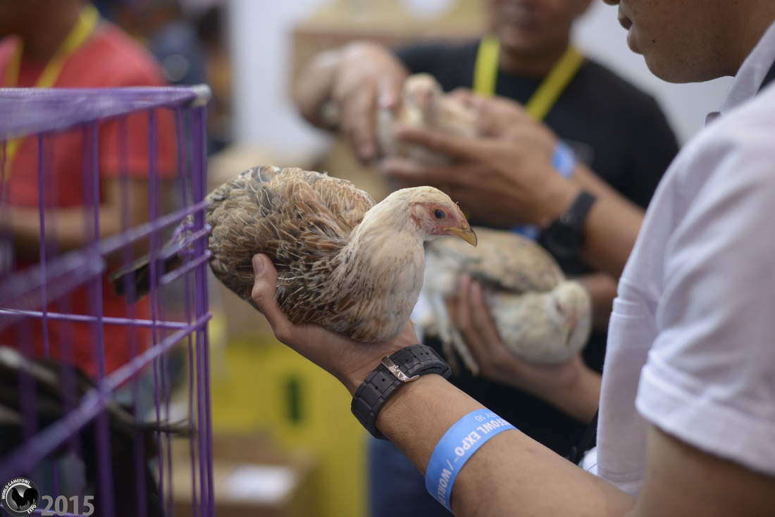 Scenes from 2015 - WORLD GAMEFOWL EXPO 2019